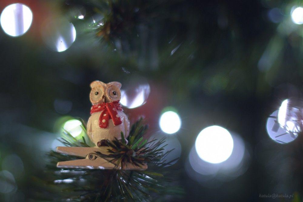 Fotopracownia radzi – fotografujemy choinki i świąteczne oświetlenie